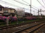 2011613ajisai_2